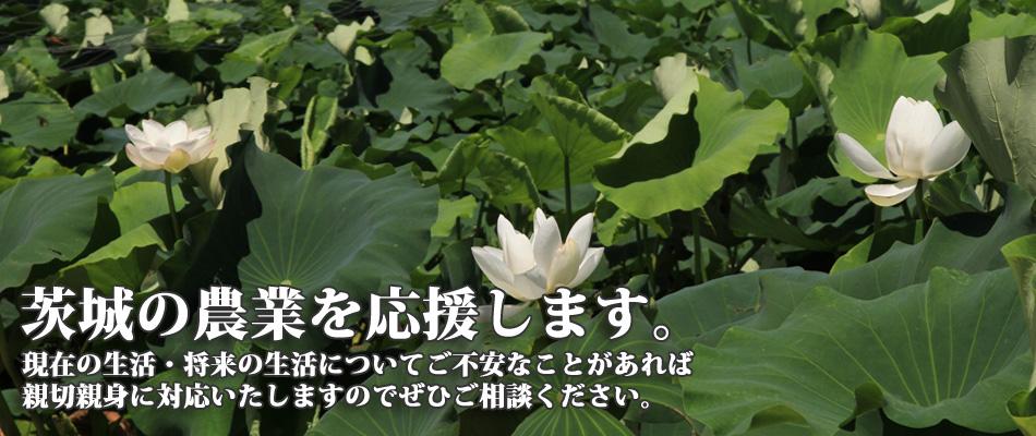 茨城の農業を応援します。3