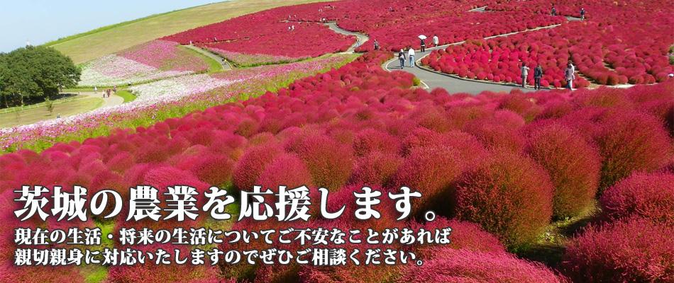 茨城の農業を応援します。4